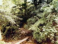 Самшитовое ущелье и водопад Чудо-красотки